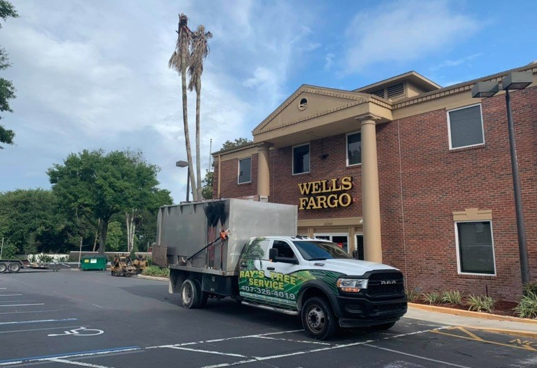 Ray's Tree Service Offers Quality Emergency Tree Care in Sanford, FL