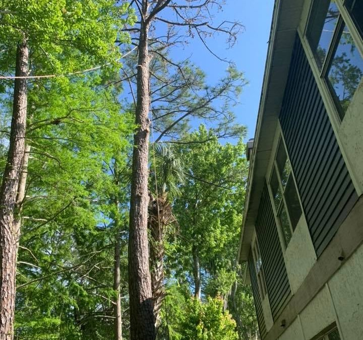 Sanford, FL Tree Care Company Offers Winter Tree Pruning Tips