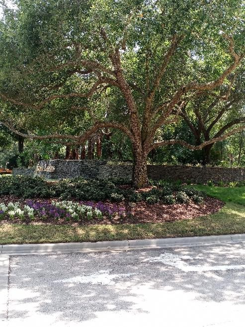 Ray's Tree Service Offers Quality Tree Care to Altamonte Springs Residents