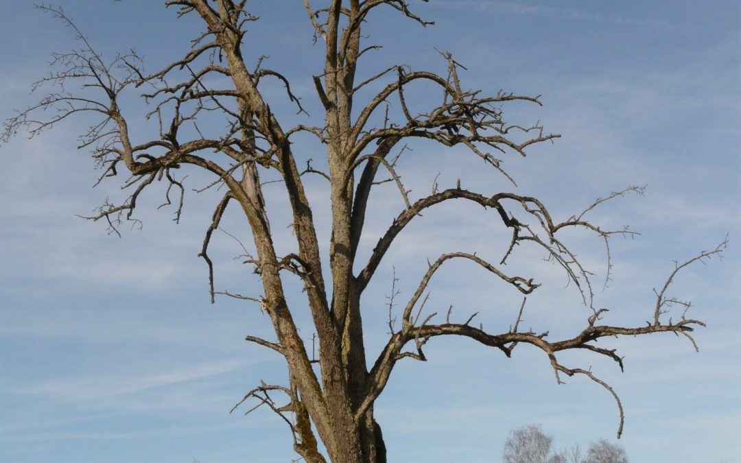 The Tell Tale Signs of a Dying Tree
