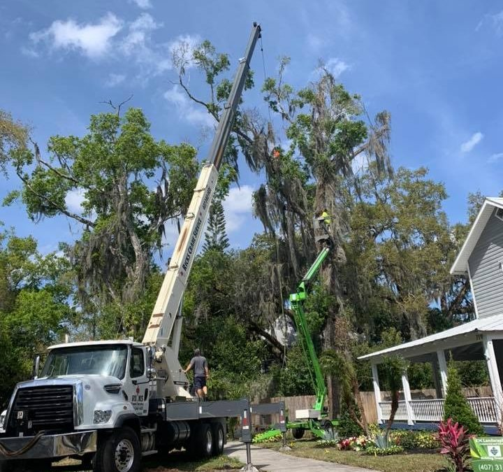 Local Tree Care Company Highlights the Importance of Tree Removal Safety