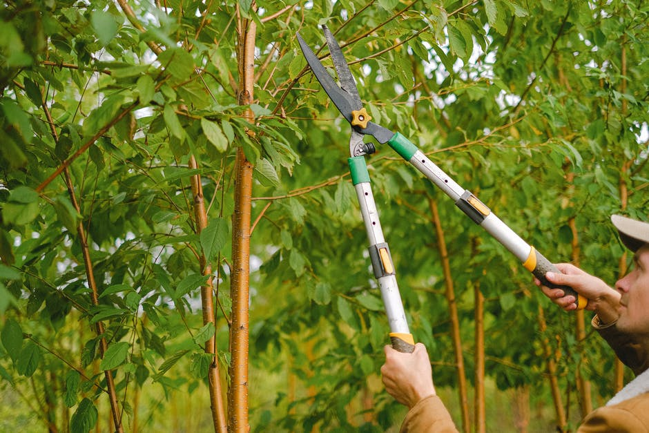 Your Seasonal Maintenance Guide: When to Trim Trees for Growth